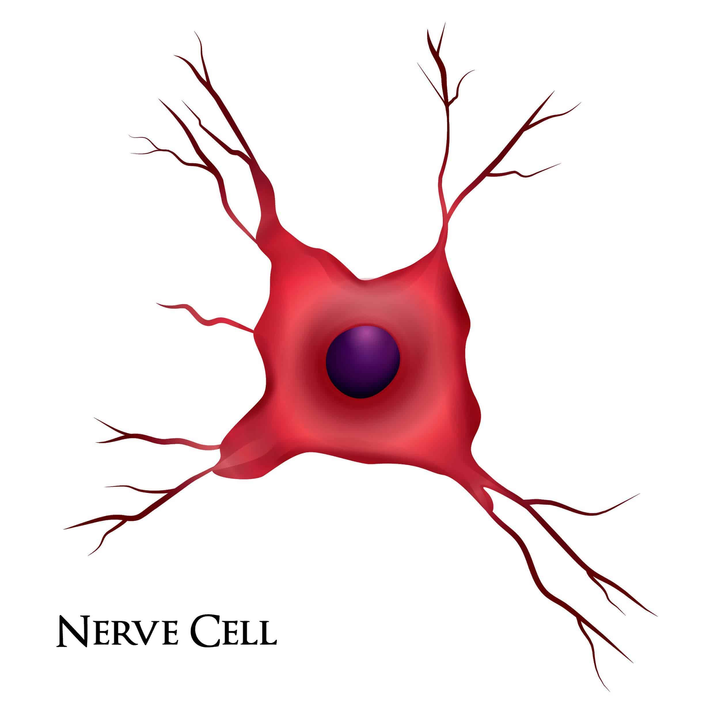 An image of a nerve cell to get help for neuropathy relief