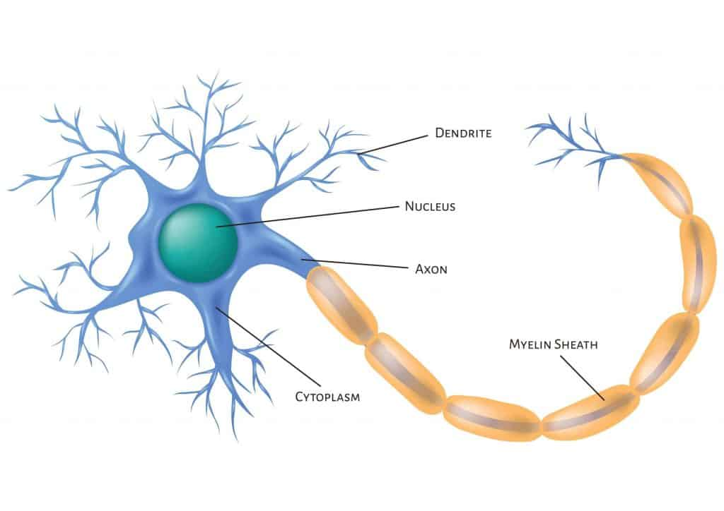 An image of a neuron to explain the causes of nerve pain